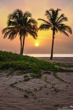 Sunrise over Palm Trees & Sand Dunes on Singer Island Beach Florida by HDRcustoms (very busy) on Flickr.