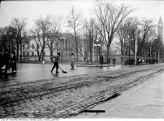 What University Avenue used to look like in Toronto Tree Line, Plait, Montreal, Toronto, That Look, Street, City, Cities