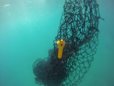 Remora by Alejandro Plasencia Biodegradable fishing nets and RFID tags to track lost nets to prevent marine deaths.