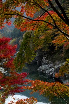 Autumn in Iya Valley, Tokushima, Japan Japan Tourist Spots, Beautiful World, Beautiful Places, Places To Travel, Places To Visit, Late Summer Flowers, Tokushima, Autumn Photography, Grand Tour