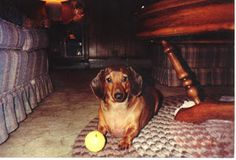 View from the Birdhouse: Dear Abby - Remembering Special Pets: Bitsy, Punkin, Maxie, and Talley