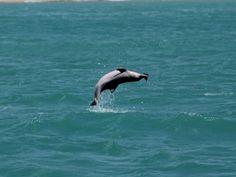 Águas de Pontal: UFRN pesquisa comportamento acústico de golfinhos ...