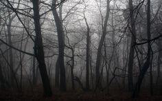 Image result for dark misty jungle