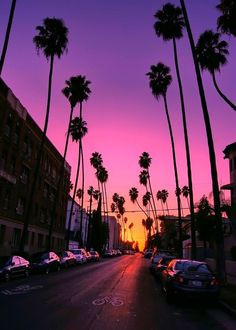 Palm trees, summer, California