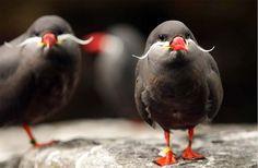 Pájaro con bigotes