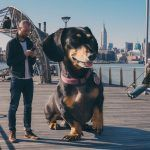A Photo Series Featuring an Oversized Dachshund and Her Owner Adventuring Around Brooklyn