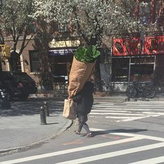 Wow! That's a big blunt.   funny pictures