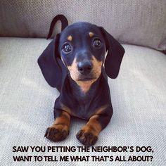 I'm sorry... . @martha_dachshund