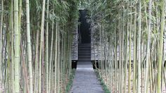 A tunnel of densely packed bamboo leads to the entrance of this villa designed by David Adjaye.