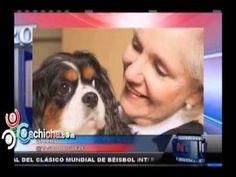 Tener un perro es bueno para tu salud #Video - Cachicha.com