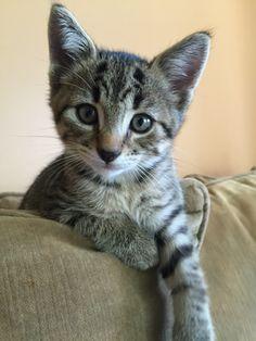 My little Loki 6 Weeks old!