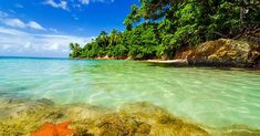 Starfish in Caribbean water next to a lush green island in San Andres y Providencia, Colombia Caribbean Resort, Caribbean Vacations, Best Resorts, All Inclusive Resorts, Luxury Resorts, Costa, Cvc, Mexico Resorts, Tropical