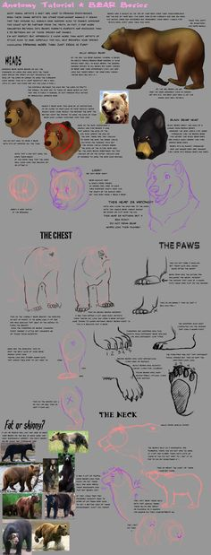 Anatomy Tutorial: Bear by AddictionHalfWay.deviantart.com on @deviantART