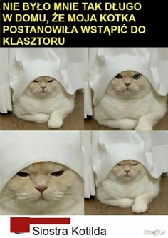 Wtf Funny, Funny Memes, Hilarious, Polish Memes, Weekend Humor, Best Memes Ever, Shrek, Fnaf, Haha