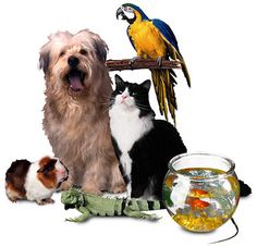 """NATIONAL LOVE YOUR PET DAY February celebrates National Love Your Pet Day. This """"unofficial"""" National holiday is a day set aside to give extra attention to and pamper your pets that you love. Love Your Pet Day, Your Dog, September Preschool Themes, Classroom Pets, Preschool Classroom, Preschool Family, Family Activities, Preschool Activities, Pet Odors"""