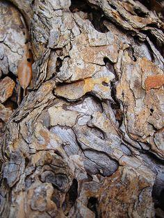 Old Tree Bark by rustyrabbit on Flickr