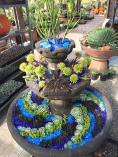 Euphorbia tirucalli Sticks on Fire Blue and green swirls in a succulent-and-glass fountain. The post Euphorbia tirucalli Sticks on Fire appeared first on Garden Diy. Succulent Landscaping, Succulent Gardening, Planting Succulents, Backyard Landscaping, Garden Pots, Container Gardening, Organic Gardening, Landscaping Ideas, Indoor Garden