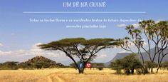 Luís Graça & Camaradas da Guiné: Guiné 63/74 - P15532: Ser solidário (189): Notícia...