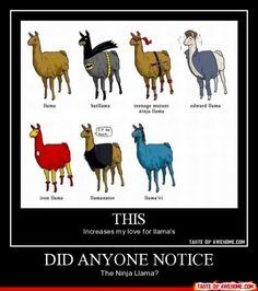 Love me some Llama's