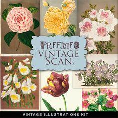 Freebies Vintage Flowers Illustrations:Far Far Hill - Free database of digital…