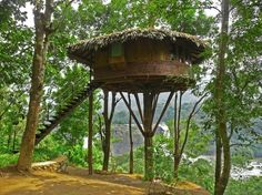 7 Cool Tree Houses You'll Want to Live In » HouseHunt Real Estate Blog | HouseHunt Real Estate Blog