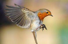 bird - Google 検索
