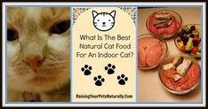 Best cat food for indoor cat