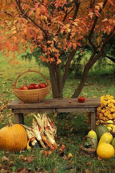Elements of Fall . Mums, Fall Harvest and beautiful Fall Leaves on trees. Autumn Day, Autumn Leaves, Autumn Harvest, Bountiful Harvest, Winter, Autumn Table, Autumn Scenes, Fall Photos, Fall Images