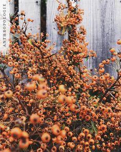 Our favorite fall color | Shop Anthropologie @benjohnsonig