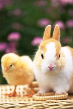 Bunny & chick. Come on, who can resist that?