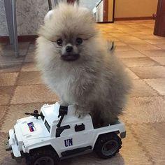 #hundeliebe #hund #auto Home Appliances, Autos, I Love Dogs, House Appliances, Appliances