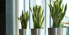 Resultado de imagen para plantas saludables para interior