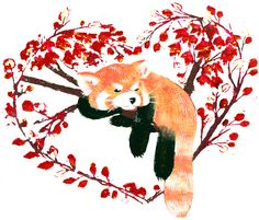 Mind wanderlust: Red Panda