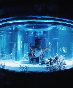 reef shark aquarium - Google Search Awesome Tanks, Cool Tanks, Reef Shark, Marine Biology, Fish Tanks, Aquariums, Man Cave, House Design, Google Search