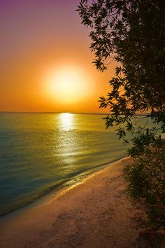 ♥♥ My Lady and I would So L♥VE to Spend some time on THIS beach! ♥♥ On Beach - Manama - Bahrain