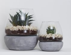How much do you love a succulent planter? We're big fans and they're perfect for adding a bit of interest to your shelving, coffee table and window sills.