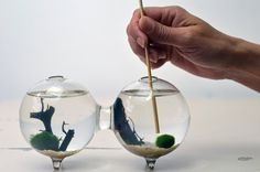 Marimo Terrarium - Japanese Moss Ball - Double Aquarium - sea fan - sand. $29.50, via Etsy.