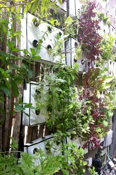 Invivo Design: urban vertical vegetation gardening