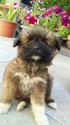 My dog is beautiful .... ! LAIKA ♡ #my #dog #life #love #quiero #retrica #tumblr #ciao #hi #beautiful #photo