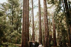 Redwoods California destination wedding | California wedding photographer | Big Sur wedding | by Mark Trela Photography (www.marktrela.com)