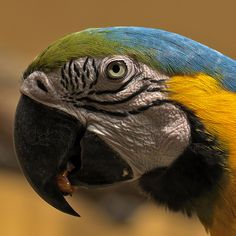 Parrot by billie