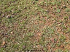 Agriculture land for sale in Thiruthani சென்னை அடுத்து அரக்கோணத்தில் சொந்த நிலம் (ஓன் ப்ரோபெர்ட்டி) விற்பனைக்கு