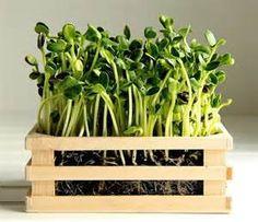 microgreen packaging ideas - Bing images
