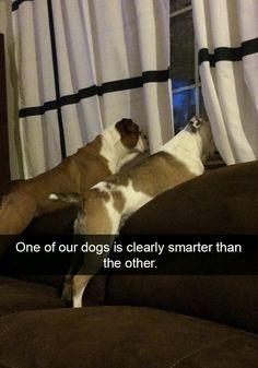 2 kind of dogo