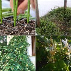 Home And Garden, Gardens, Plant, Outdoor Gardens, Garden, House Gardens