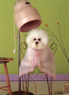 dog at a hairdresser