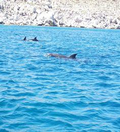 La Paz Dolphins, October 2013