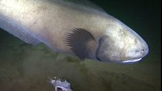 BBC News - New Hebrides trench: First look at unexplored deep sea