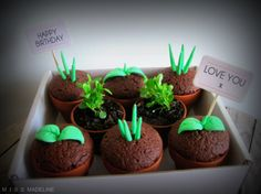 Potted Plant Cupcakes by Miss Madeline