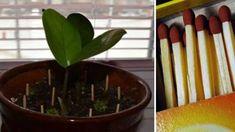 Dzięki tym poradom utrzymasz dom w idealnej czystości. Flora, Garden, Plants, Health, Garten, Lawn And Garden, Gardens, Plant, Gardening
